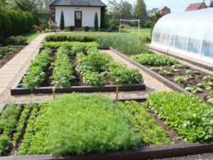 Совмещение дизайна и овощных посадок