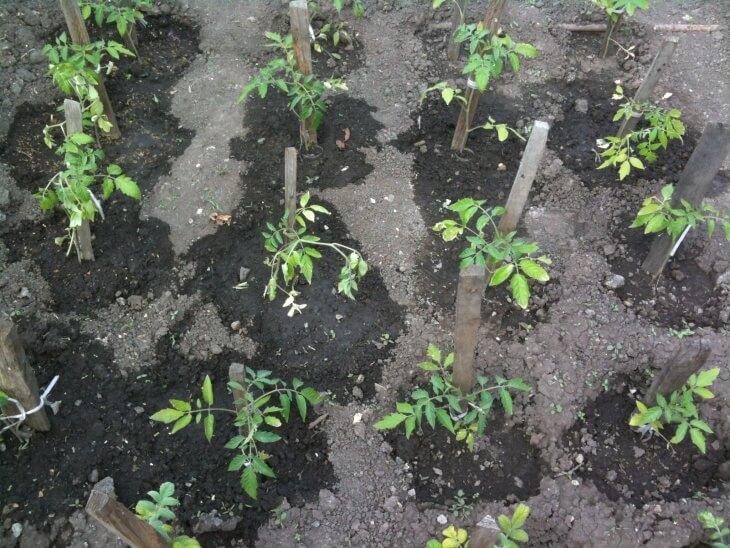 Удобрение поможет добиться богатого урожая