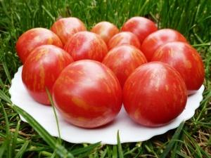 Очень мясистый сорт помидоров