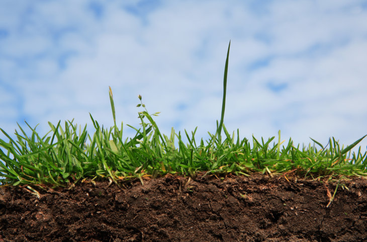 Здоровье почвы очень важно