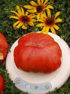 Плоды томатов со своего огорода