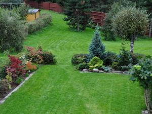 Дизайн хвойного сада