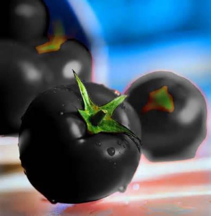Сорт «Черная лакомка» выращивается в открытом грунте