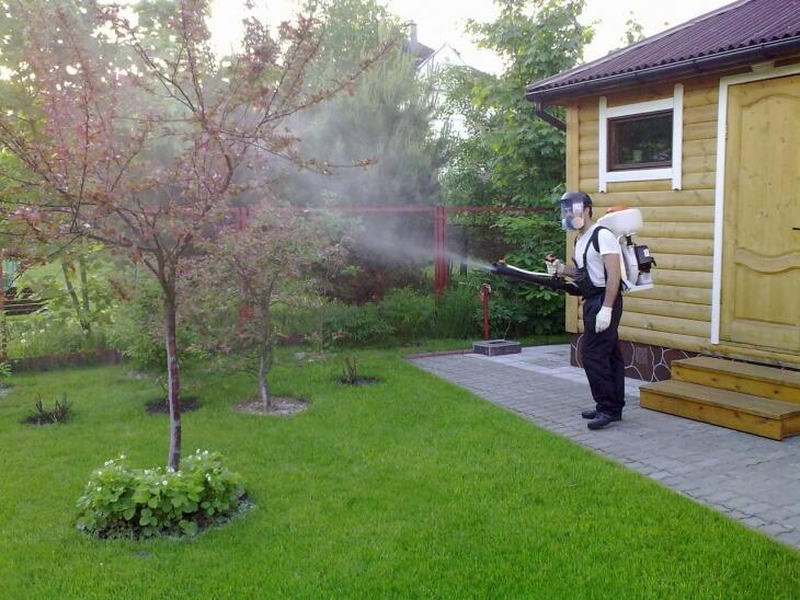 Весной дерево опрыскивается три раза