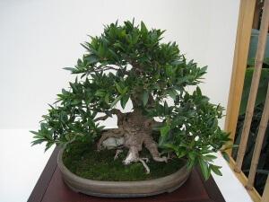 Высаживать растение надо только тогда, когда у него появятся хорошо сформированные корни