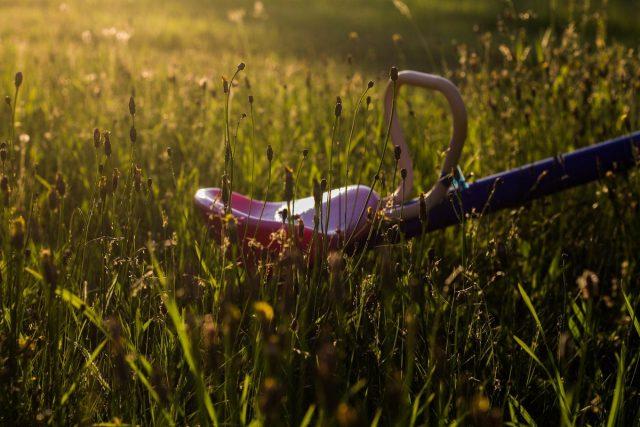 Если не стремится к идеальному саду, то «сорный» газон, может, кому-нибудь и подойдет