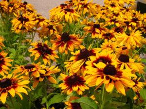 Прекрасное цветение в саду
