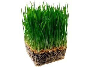 Требования к траве для газонов