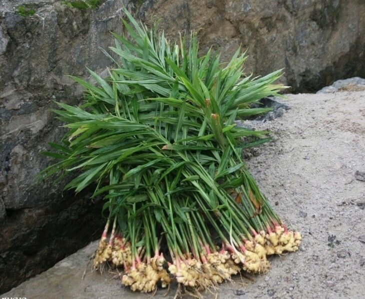 Рассаду можно сразу же высаживать в грунт