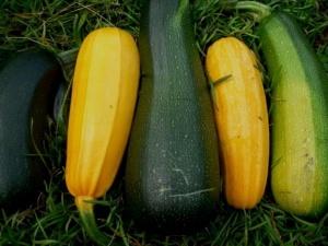 Выращиваются цуккини как в теплицах и парниках, так и в открытых грунтах