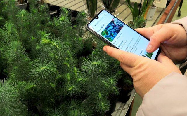Выбирая новые сорта и гибриды, читайте их характеристики у тех, кто его выращивал