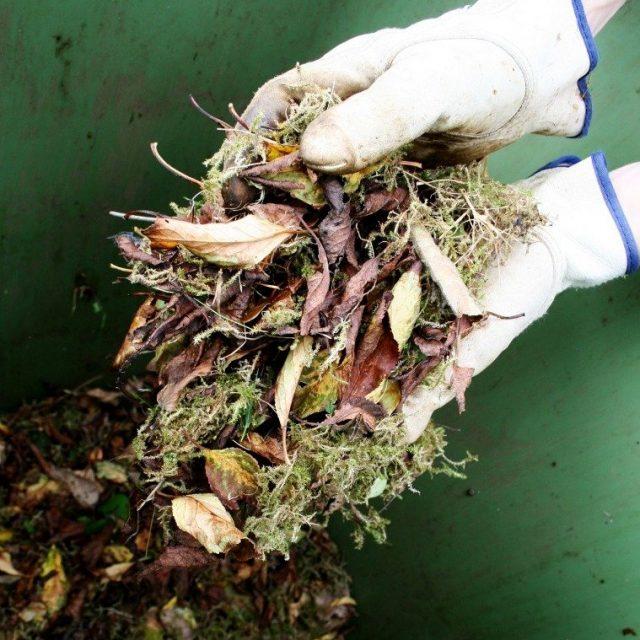 Для мульчирования я использую все растительные остатки