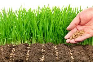 Какие семена посадить