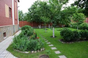Какие кустарники посадить на даче