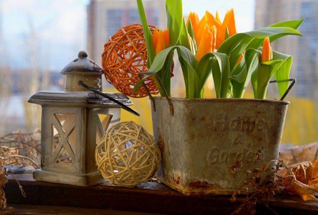 Класс «ботанические тюльпаны», в основном, представляет невысокие культивары, чей рост обычно не превышает 15-30 см