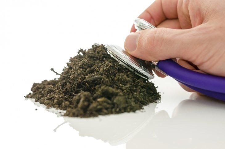 Кислотность почвы важно знать каждому