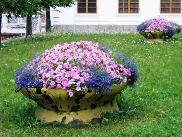 Украшение клумбы яркими цветами
