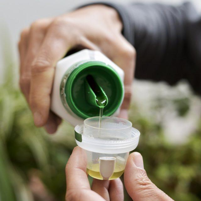 Подкормки проводят только удобрениями, рекомендуемыми для подкормок этого вида комнатных растений
