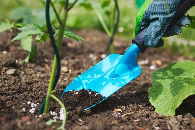 Перекорм не приносит пользы ни растениям, ни нам, эти растения употребляющим