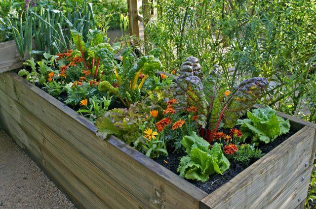 Посадите растения, нуждающиеся в притенении, в компании достаточно высоких, чтобы они могли отбрасывать тень на своих соседей
