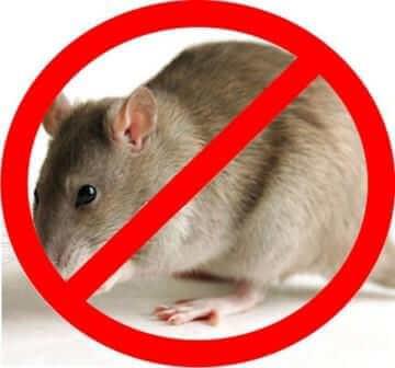 Избавиться от мышей просто!
