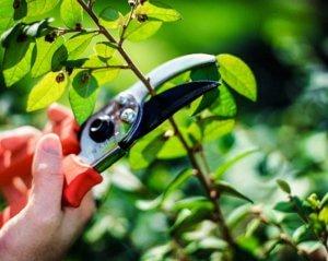 Уничтожение вредителей на растении