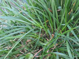 Характеристика газонных трав наиболее подходящих для климата России