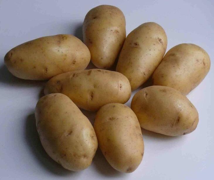 Отличный урожай картофеля
