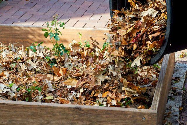 Опавшая листва — отличный мульчирующий материал