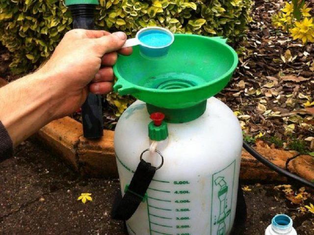 Для осеннего искореняющего опрыскивания сада медный купорос применяют в концентрации 300 грамм на 10 л воды