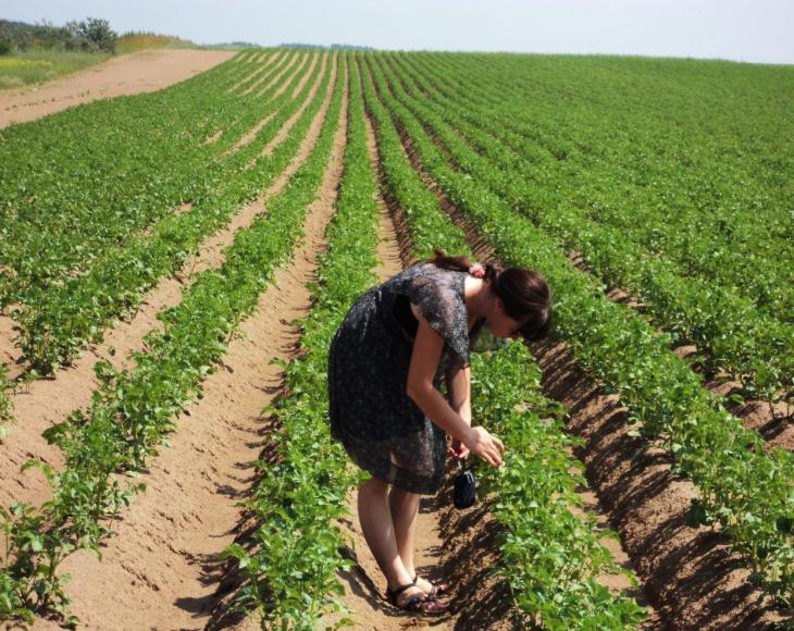 Данная технология широко используется садоводами