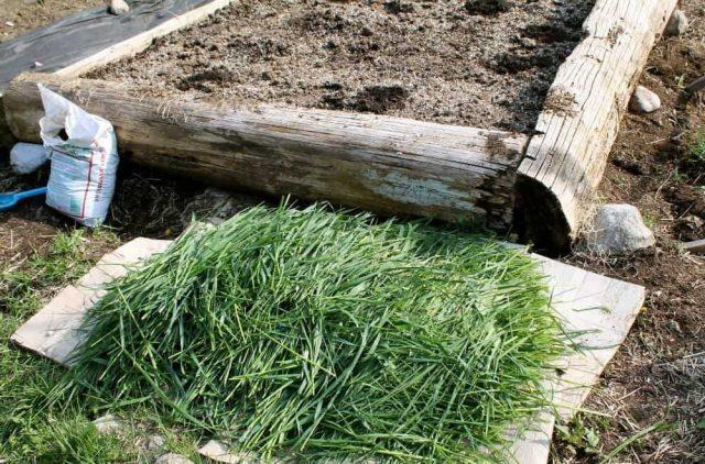 По весне с первым покосом всё скошенное укладывается в грядки и проливается «Байкалом ЭМ»