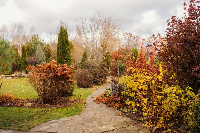 Какие работы проводят в саду и огороде в ноябре