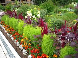 Растения для дизайна дачи