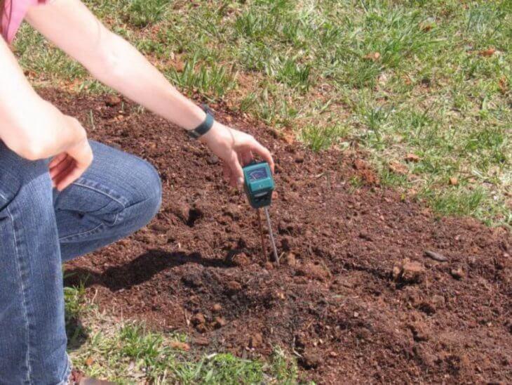 Проверка кислотности почвы