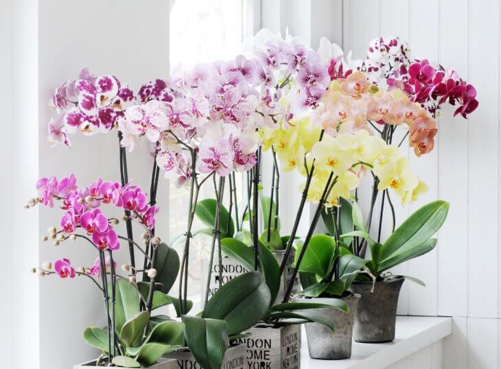 Что делать с орхидеей после цветения?