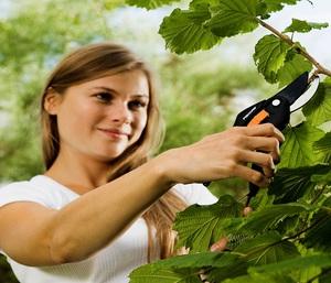Описание нюансов сезонного ухода за садом