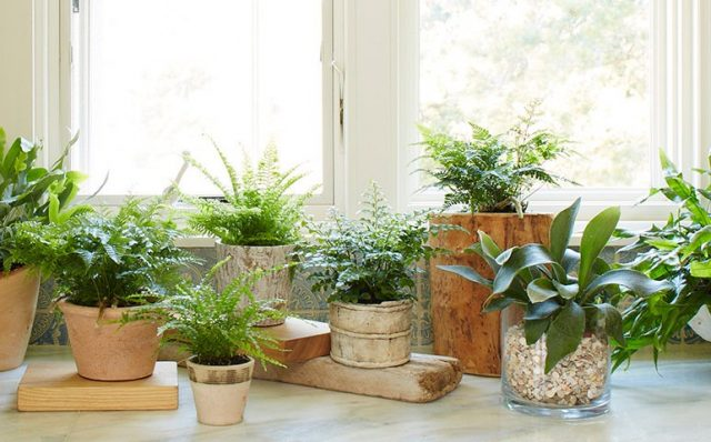 С изменениями светового дня все виды растений, для которых недопустимо сезонное сокращение освещения, нужно переместить поближе к светлым окнам