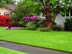Советы специалистов, как обеспечить хороший и красивый вид газонам