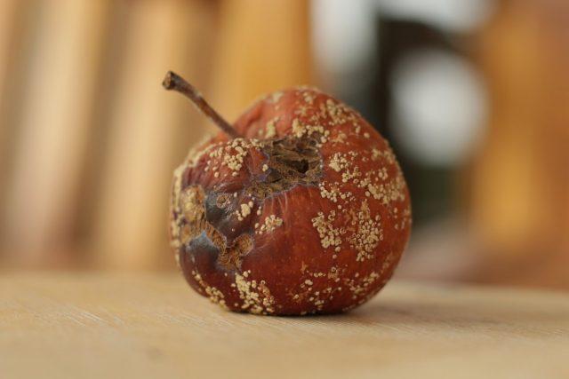 Кладоспориозная гниль яблока