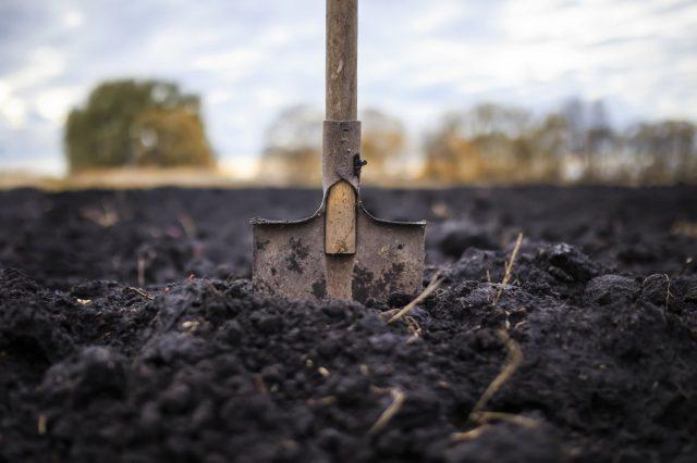 Если обрабатывается заброшенный участок или целина, то осенняя перекопка необходима