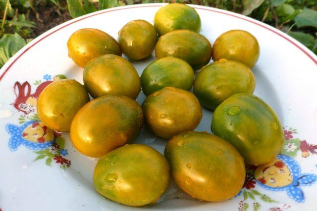 Томаты черри «Зелёная Жемчужина» (Solanum lycopersicum var. Cerasiforme 'Green Pearl')